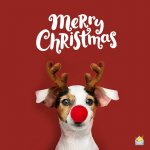 merry-christmas-wishes-1.jpg
